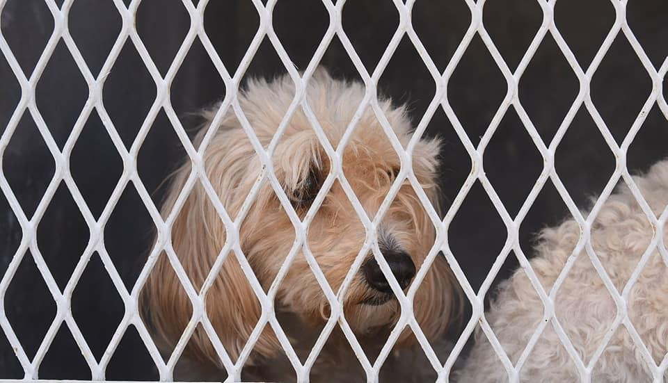 Imagen centro de atención canina de Irapuato.